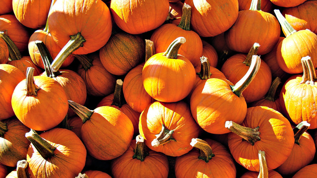 Pumpkin: The Powerful Antioxidant for Your Face
