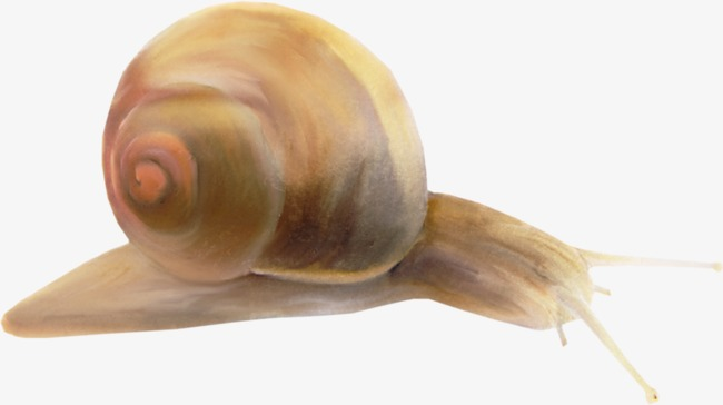 Does Snail Slime Really Work for Your Skin?